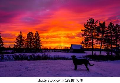 Red sunset dog silhouette. Sunset dog silhouette. Dog silhouette sunset scene. Winter sunset dog