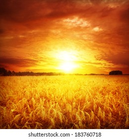 Red sunset over wheat field.