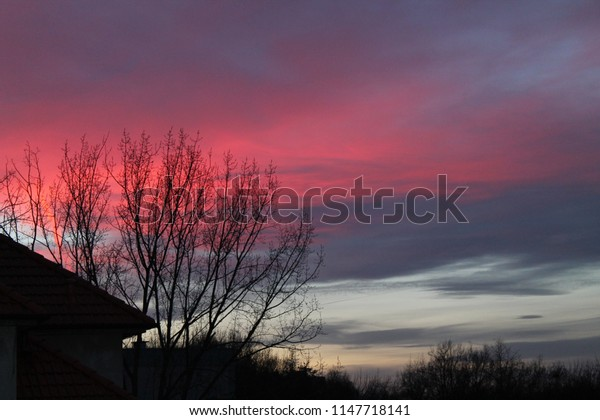 red sunset with trees