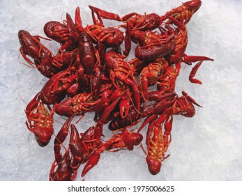 Red swamp crayfish cooked on ice displayed for sale in a supermarket in Madrid, Spain. The  red swamp crayfish, Louisiana crawfish, or mudbug (Procambarus clarkii) is a freshwater crayfish.