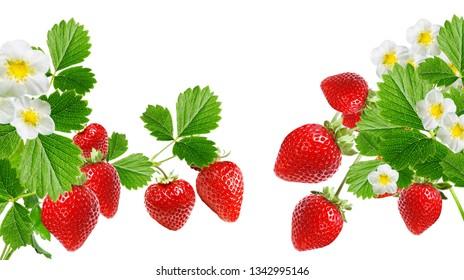 red sweet garden strawberry