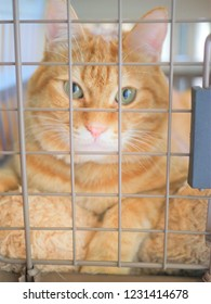 Red tabby cat in the basket
