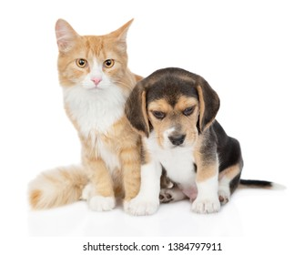 Red tabby cat and beagle puppy sitting together. isolated on white background