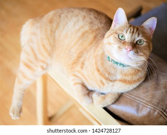 Red tabby cat looking up on a chair
