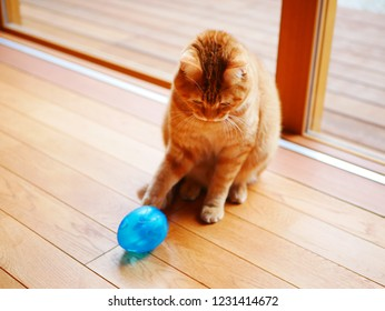 red tabby cat playing with toys
