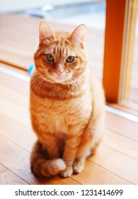 red tabby cat sits down