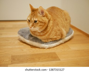 Red Tabby cat sitting on a cushion