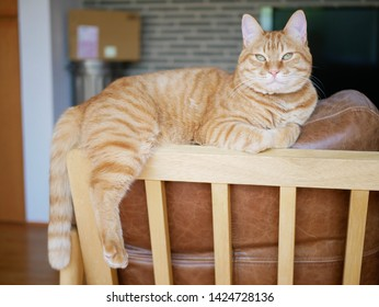 Red tabby cat sitting on the backrest of the sofa
