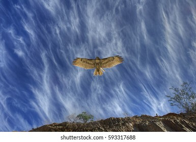 Red Tailed Hawk Cruising over Phoenix Mountain Preserve