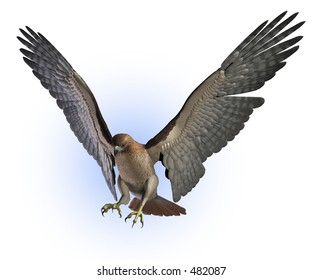 Red Tailed Hawk getting ready to land - 3D render.
