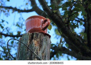 Red tea cup on a tree trunk, reflection of tree branches and nature around. Big plum tree blurred in the background.