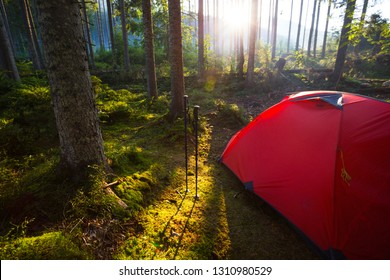 red tent and Trekking poles in the forest against the background of the rising sun