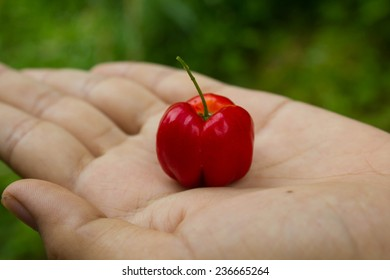 https://image.shutterstock.com/image-photo/red-thai-cherry-hand-260nw-236665264.jpg