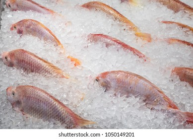 Red tilapia on ice in supermaket
