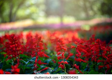 Red tiny flowers in Botanic garden background