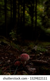 red toadstool in the Polish forest