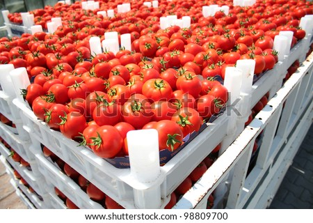 red tomatoes in the boxes