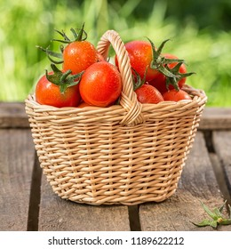 Red tomatoes in wicker basket on the garden wooden table. Vegetables harvest. Organic fresh harvested vegetables