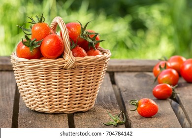 Red tomatoes in wicker basket on the garden wooden table.