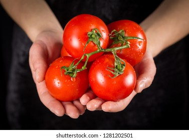 Red tomatoes in woman hands with water drops on black background
