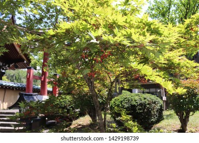 Red torii and trees in Japanese shrines