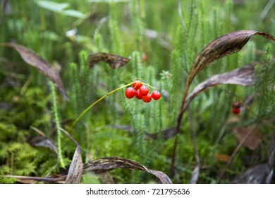 Red toxic forest berry