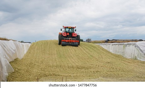 A red tractor on a partially filled silage clamp at a dairy farm, compacting the freshly chopped maize with a heavy silage roller, fermented the stored maize will be used as cow feed in winter