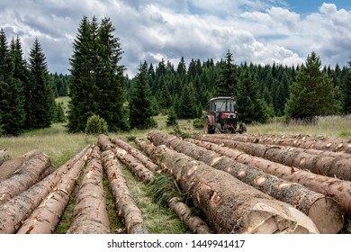 Red Tractor Pulling Tree Logs for Timber Industry. Felling of the Green Forest.