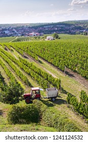 Red tractor ready for harvesting grapes in vineyard, sunny autumn day, Southern Moravia, Czech Republic, aerial view
