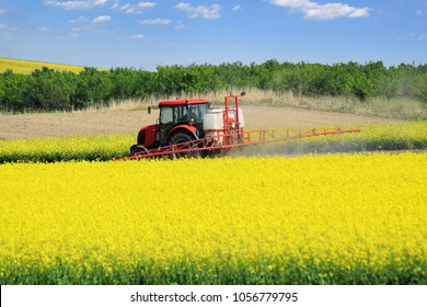 The red tractor in spraying the oilseed rape farmland during spring blossom