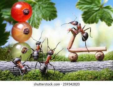 red traffic lights and bicycle loosing brake , ant tales