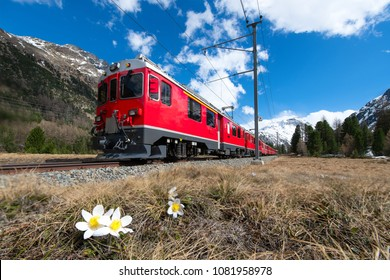 The red train of the Bernina express passes near Pontresina in spring.