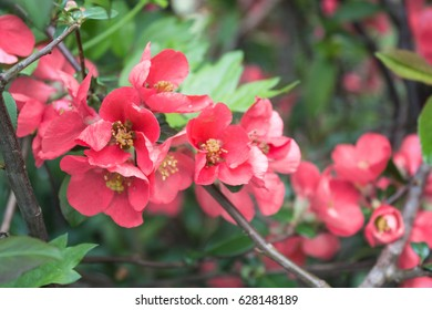 red tree blossoms