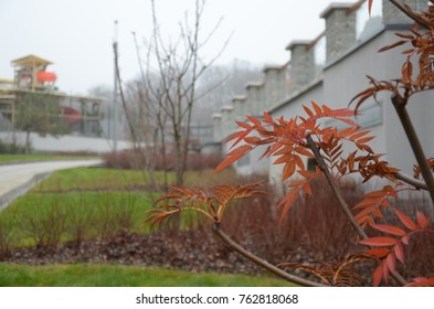 Red tree branch with autumn colors and white fence and nature on the blurred background, autumn composition in a foggy weather, park for relax