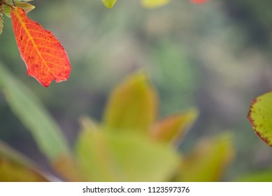 Red tree leaf focused on foreground with blur background. Abstract shot