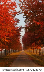 Red trees in an alley during sunrise