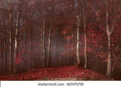 Red trees in foggy forest