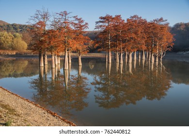 Red trees in water