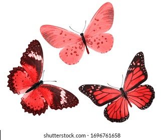 red tropical butterflies isolated on a white background. moths for design