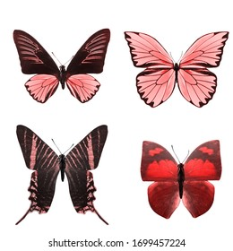 red tropical butterflies isolated on a white background.