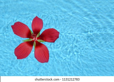 red tropical flower floating in swimming pool water