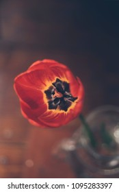 Red tulip in a glass vase on a wooden background