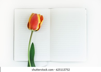 Red tulip and notebook on white table. Empty space for lettering, text, letters, inscription.