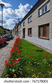 Red tulips, blooming in the street in front of houses.