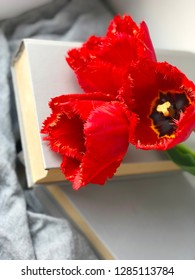 red tulips and books close up. Spring reading wallpapper