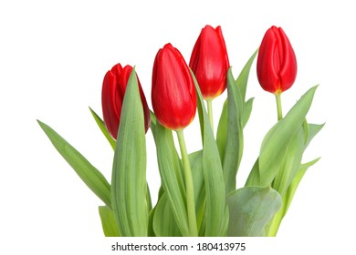 Red tulips cutout, isolated on white background