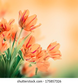 Red tulips with green grass. Floral background.