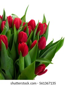 red tulips with green leaves close up isolated on white background