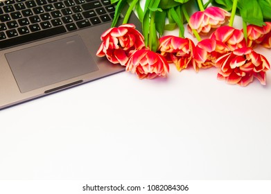 Red tulips, laptop on white background.