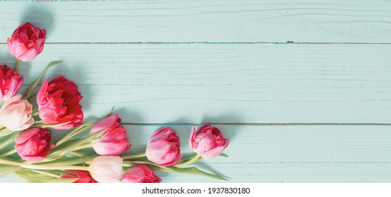 red tulips on blue mint wooden background